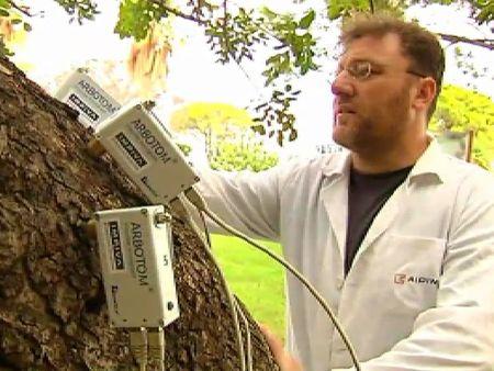 Tecnología contra las caídas de árboles